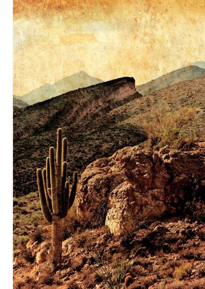 Sonoran desert photograph by Stu Jenks