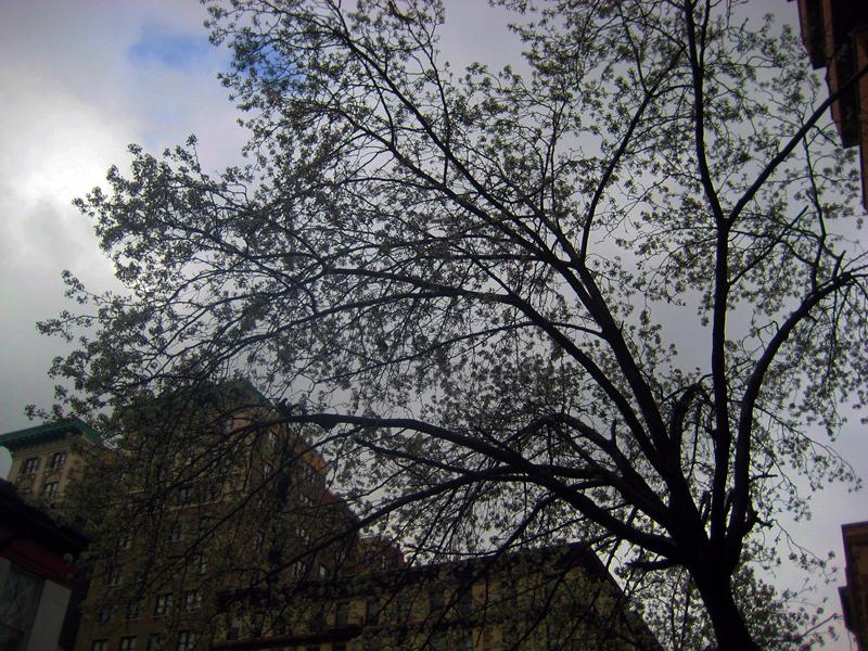 Morning sky  New York City