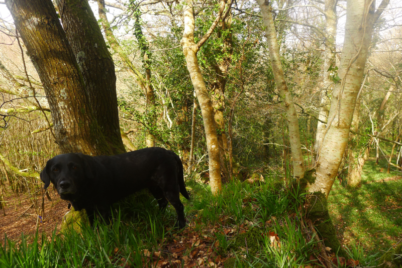 The Hound in spring