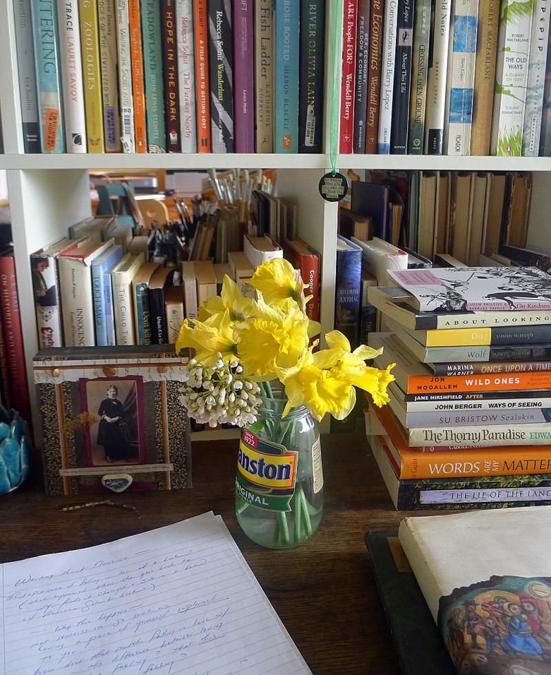 Wild daffodils on my desk