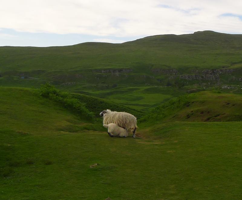 Lamb nursing in the Fairy Glen