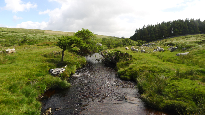 The Walla Brook, Dartmoor