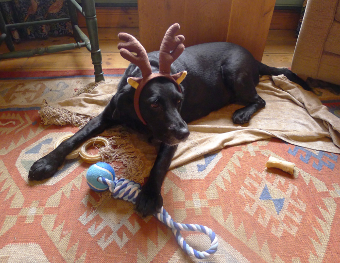 Tilly the Black-nosed Reindeer