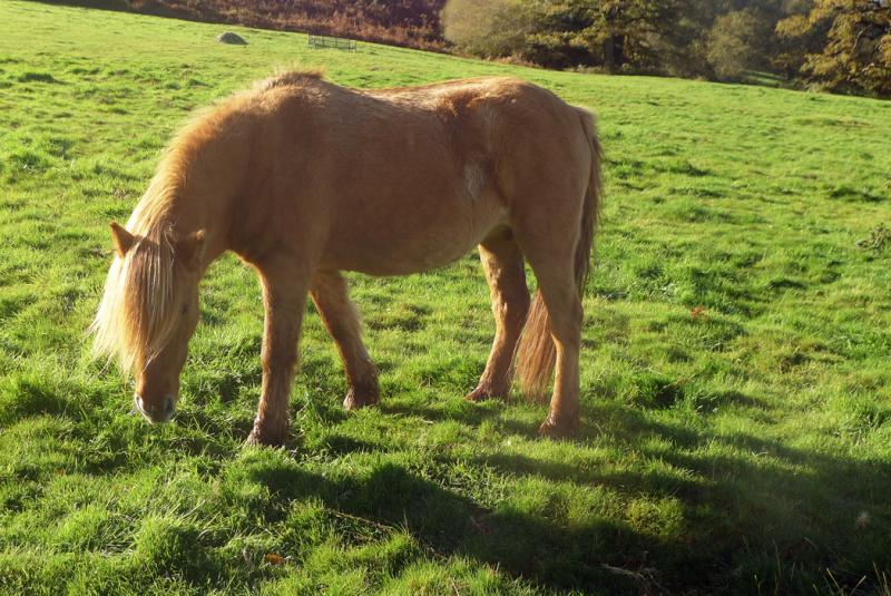 Ponies a
