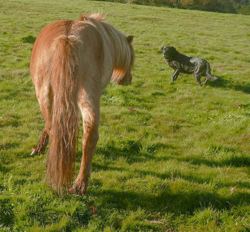 Pony and hound
