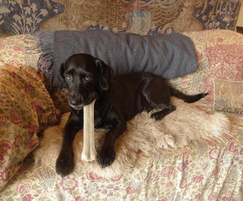 Tilly's new bone