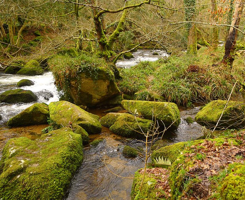 Plymbridge Woods 8