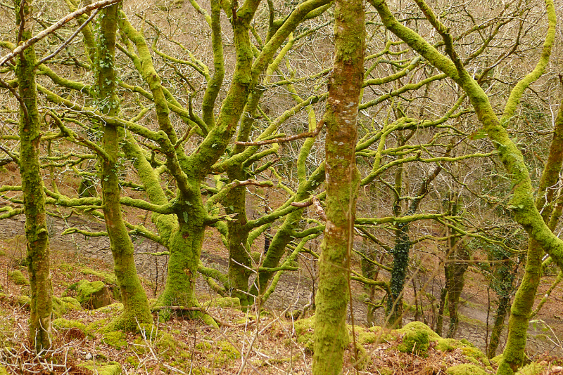 Plymbridge Woods 10