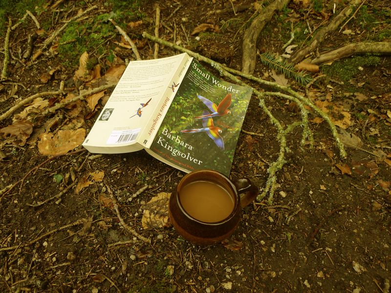 Reading in the woods 6