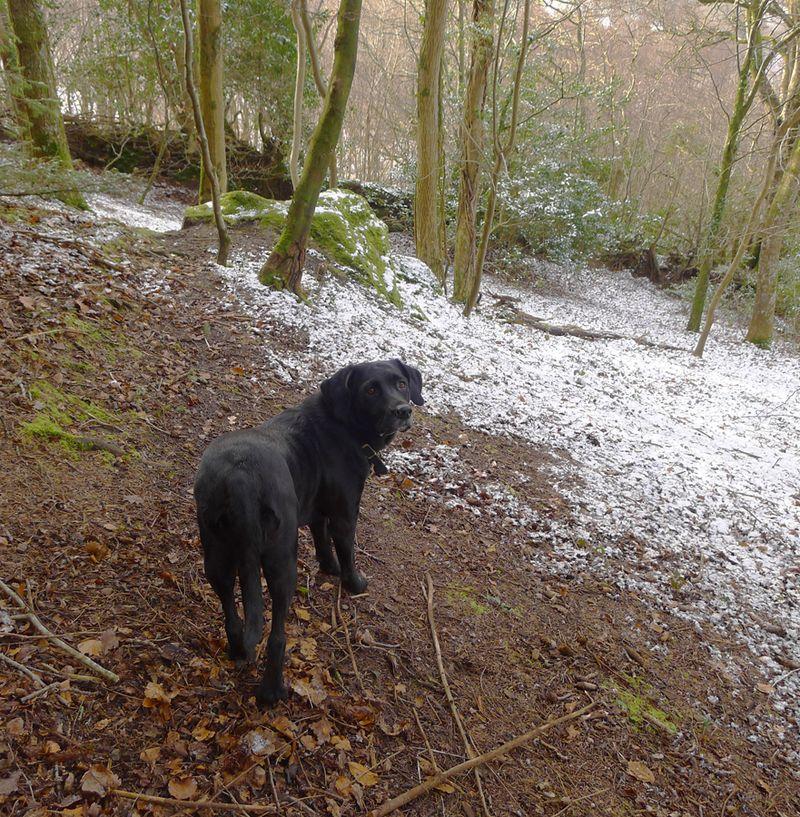 Woodland snow.