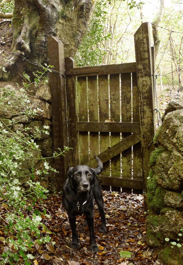 Winter gate 3
