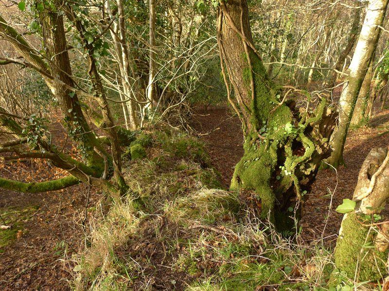 Woodland border 9