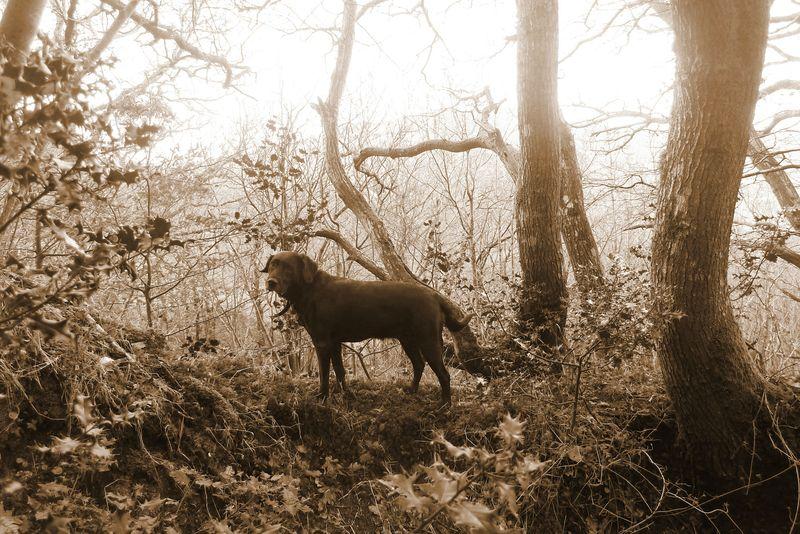 Woodland boundary 3