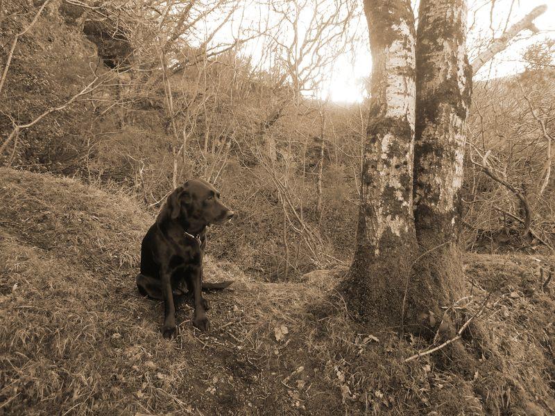 Woodland boundary 8