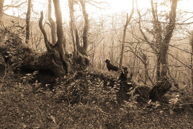Woodland boundary 5