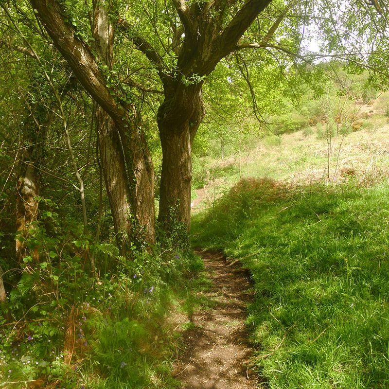 Pathway 7