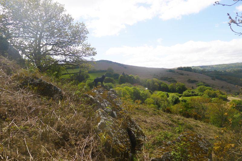 Hillside 7