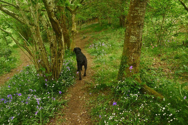 Wildflower path 4