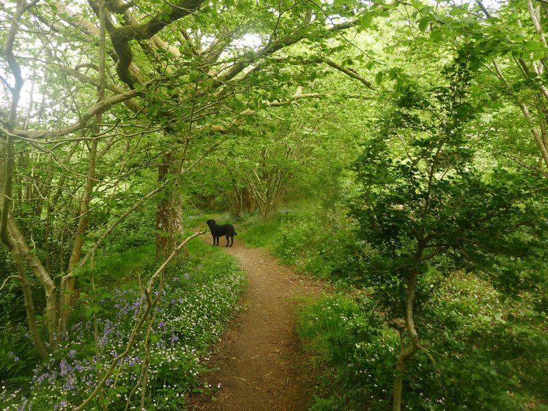 Wildflower path 2