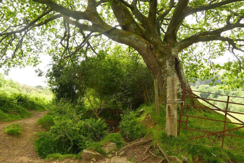 The harmonics of oak, earth, air, water, and sun.