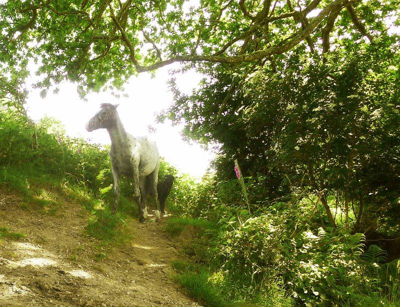 Friendly Dartmoor ponies