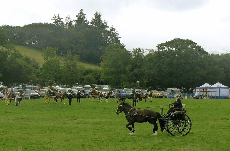 Carriage-driving competition