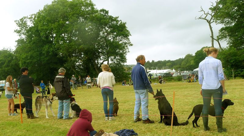 Dog competition at Chagford Show