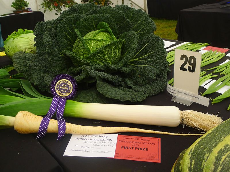A prize-winning cabbage at the Chagford Show