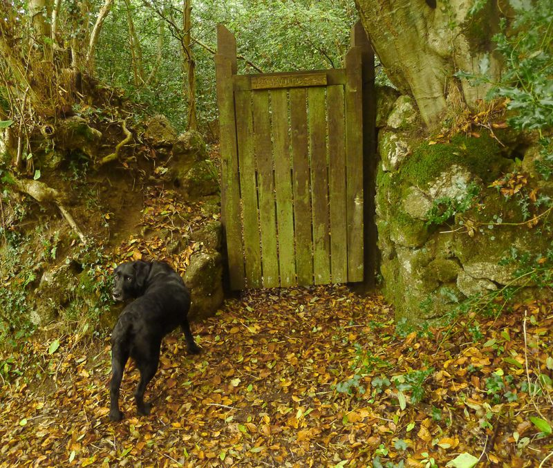 Woodland gate in autumn