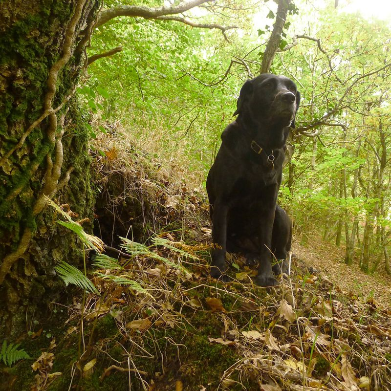 Hare watcher at the woodland's edge