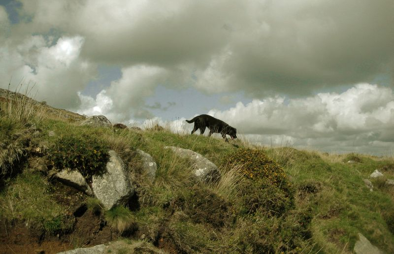 Tilly on Dartmoor near Belstone