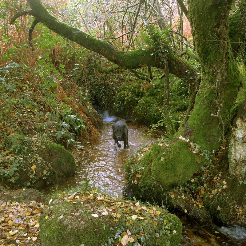Leaping from the Fairy Spring, autumn again