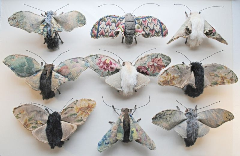 Moth collection by Mr. Finch