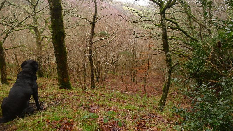 Woodland meditation 3