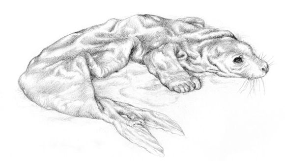 Selkie drawing by Alan Lee