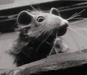 The Rat That Wrote, directed by Billy O'Brien