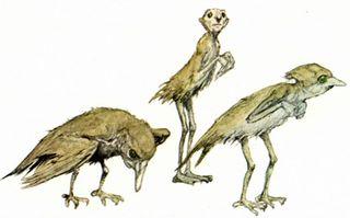 Bird faeries by Alan Lee