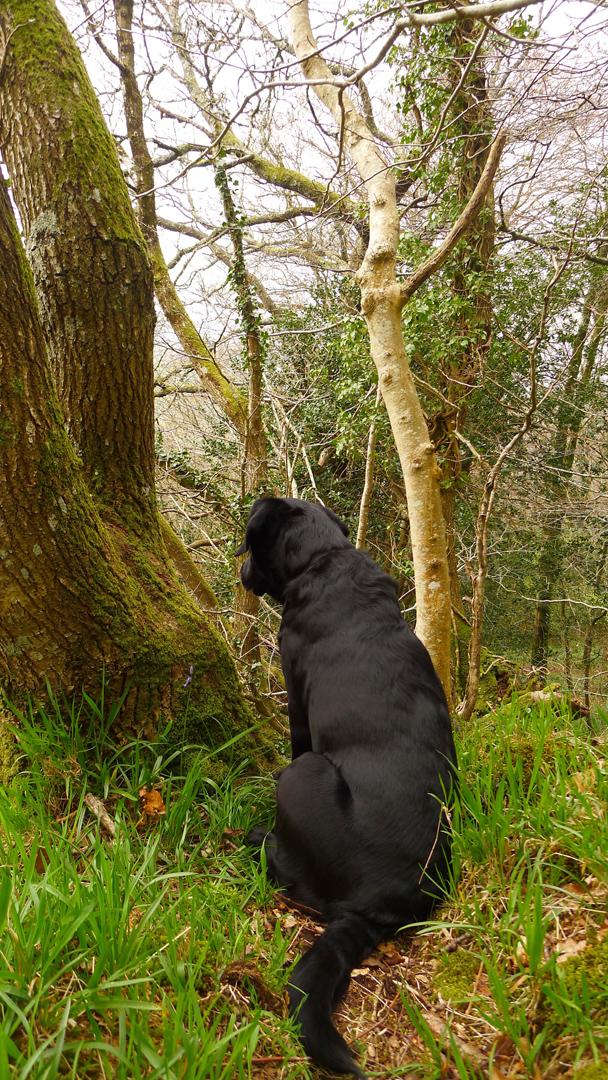 In a Devon Wood