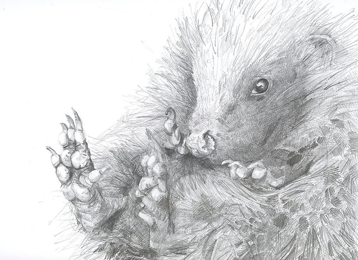 Hedgehog art