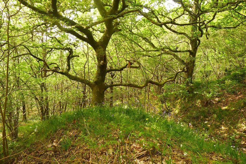 Fairy tree in spring