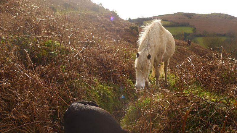 Pony 4