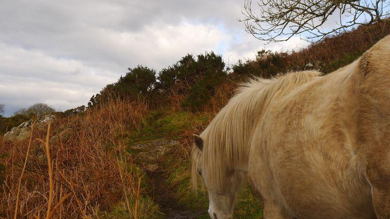 Pony 9