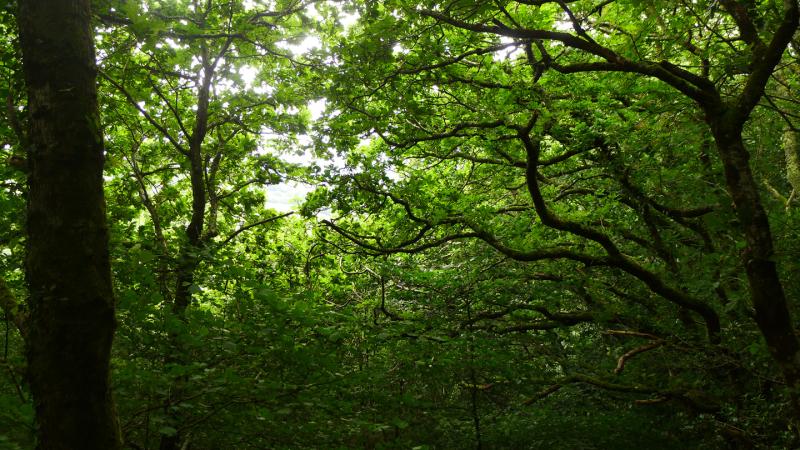 Woodland reverie 3