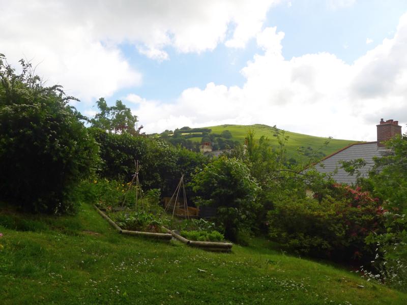 The back garden at Bumblehill