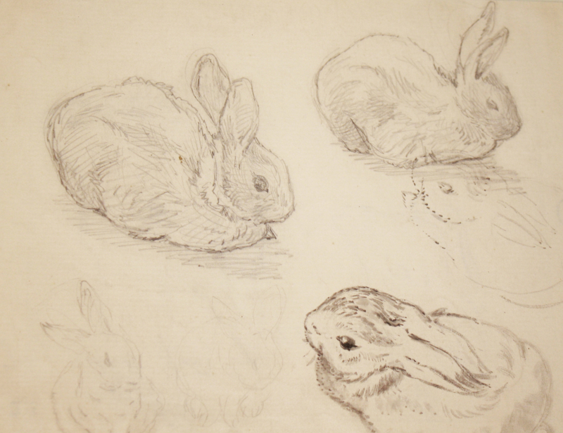 Rabbit studies by Beatrix Potter
