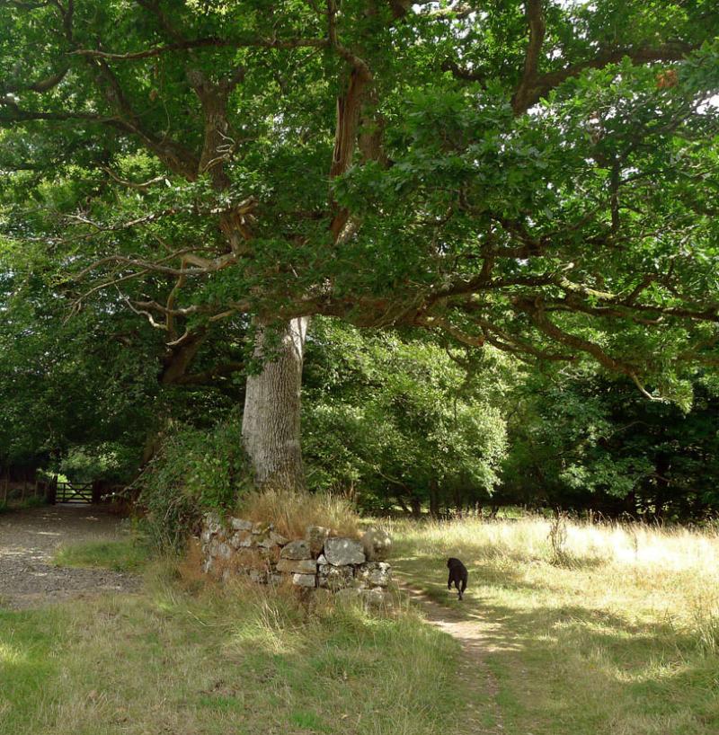 Circling the tree, walking widdershins