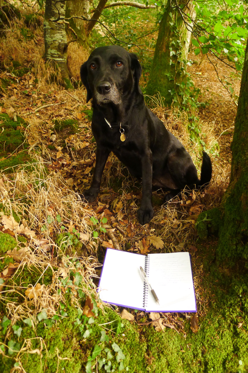 Writing in the woods