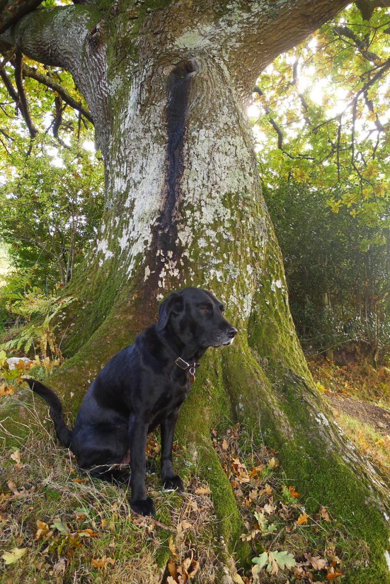 Tilly and the oak elder 3