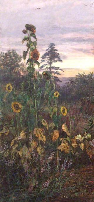 Study of Sunflowers