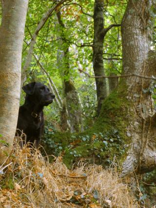 Nattadon Woods 2